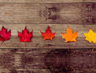 La belle saison d'automne est de retour