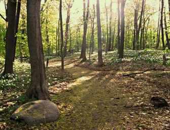 A walk in Summit Woods