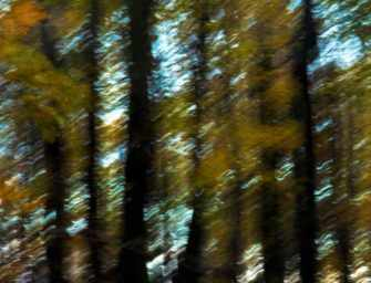 Galerie photo : automne <br>par Joe Donohue