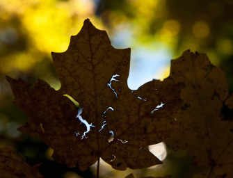 Autumn photo Gallery: <br>by Joe Donohue