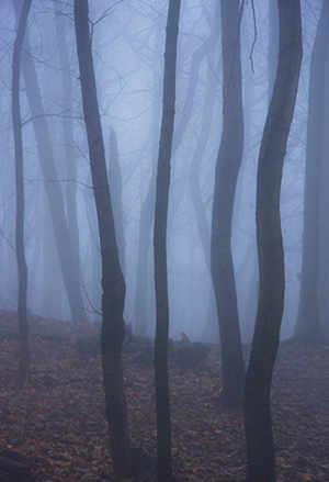 photo: Joe Donohue: Landscape Dream