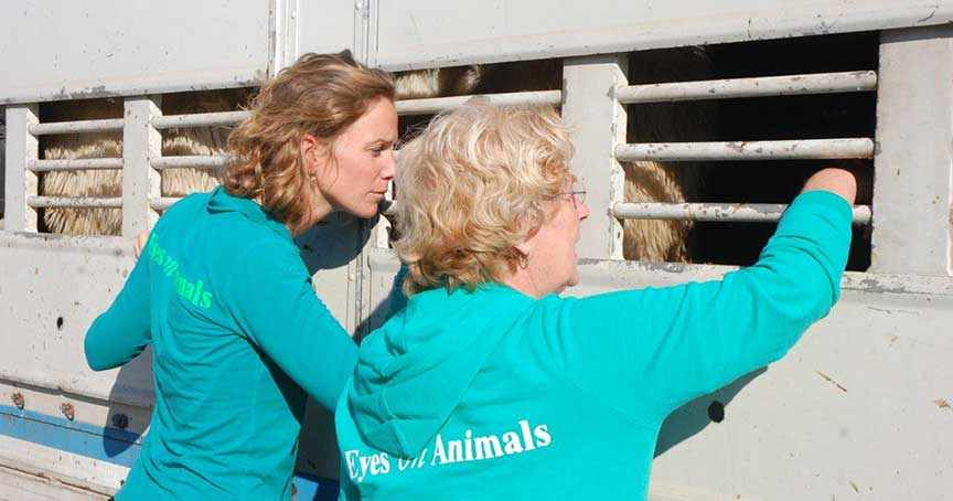 Lesley Moffat and fellow Eyes on Animals inspector at work