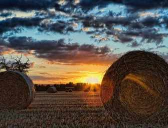 Life Is A Harvest