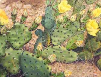 Cactus flower paintings <br>art exhibition