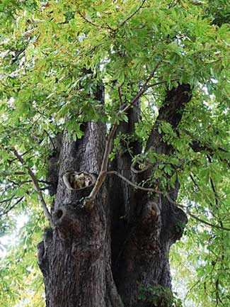 Cheshire Cat tree WestmountMag.ca