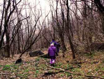 Un espace naturel oublié <br>au cœur de Montréal