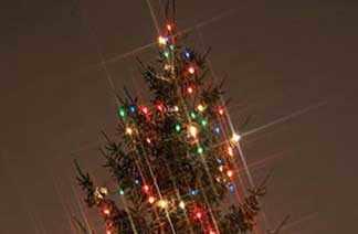 Xmas tree WestmountMag.ca