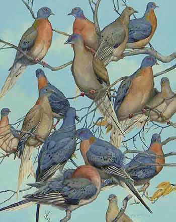 de-extinction passenger pigeons WestmountMag.ca