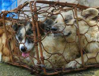 Yulin Festival: stopping the horrific dog meat trade
