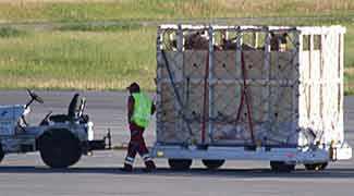 horse airport trailer - WestmountMag.ca