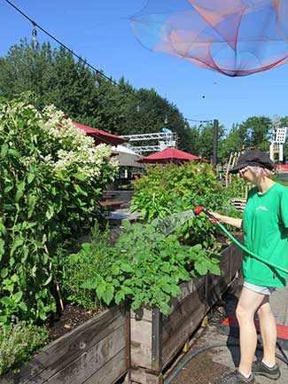 Jardins Gamelin - WestmountMag.ca
