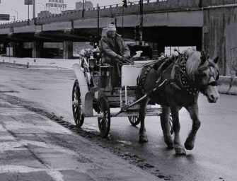 The plight of Montreal's <br>calèche horses