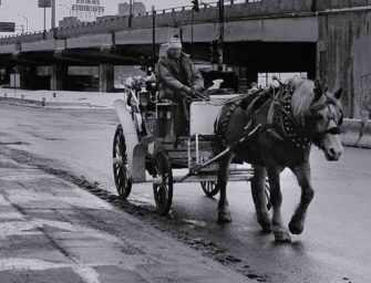 Le sort des chevaux <br>de calèche à Montréal