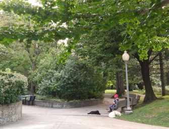 Westmount's Trees <br>and Their Stories /7