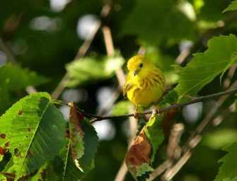 Technoparc Bird Walk <br>aims to protect biodiversity
