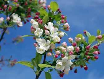Offrez-vous un renouveau de printemps