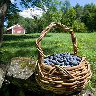 basket of blueberries - WestmountMag.ca