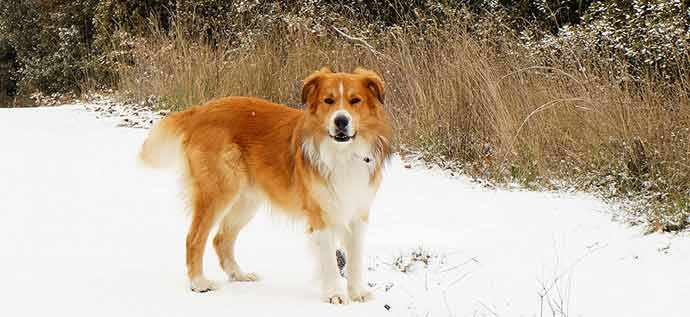mixed breed dog in snow - WestmountMag.ca