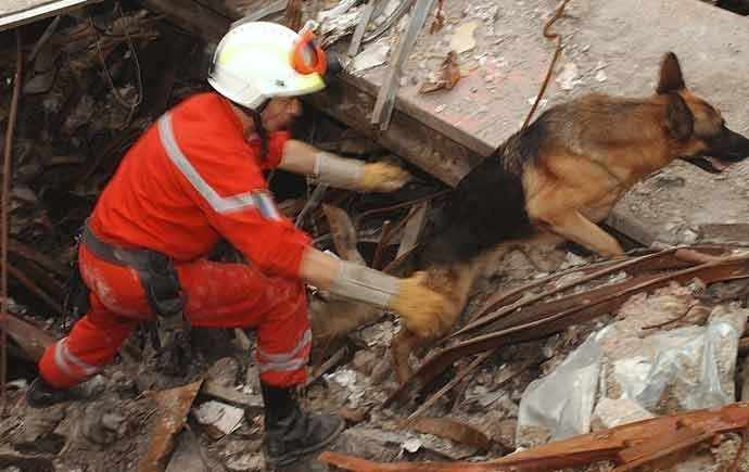 Canine rescue team at World Trade Center 9/11 - WestmuntMag.ca