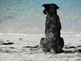 Potcake rescues dogs on <br>the Turks and Caicos Islands
