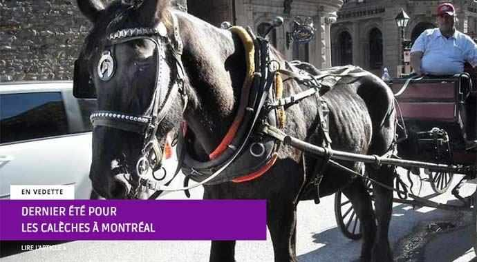 Dernier été pour les calèches à Montréal – WestmountMag.ca