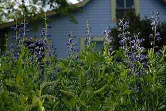 cottage with blue flowers - WestmountMag.ca