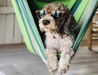 Real Estate Talk: <br>Dog-friendly neighbourhoods