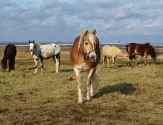 The healing power <br>of horses with Karine
