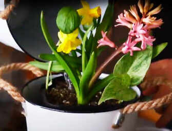 Discover Gardening in <br>Small Spaces with Graham