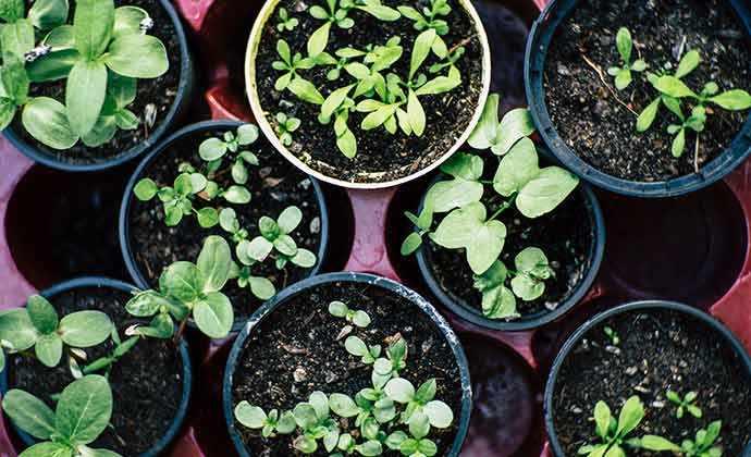 seedlings - WestmountMag.ca