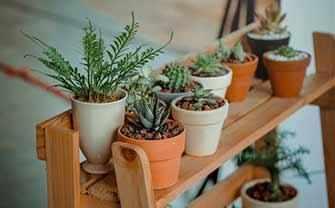 houseplants - WestmountMag.ca