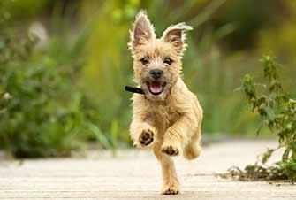 puppy running - WestmountMag.ca