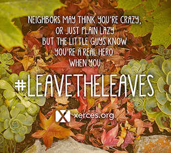 Leave the Leaves! promo