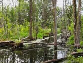 A call for the creation <br>of a new wildlife reserve