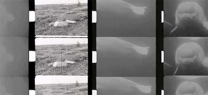 Phi – Speculating Futures – Maryse Goudreau: The Beluga Constellation – WestmountMag.ca