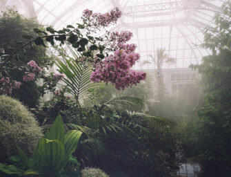 Glasshouses need <br>imagination to thrive /2