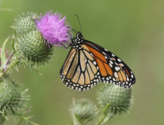 Clifford Lincoln petitions Justin Trudeau to save Monarch Fields