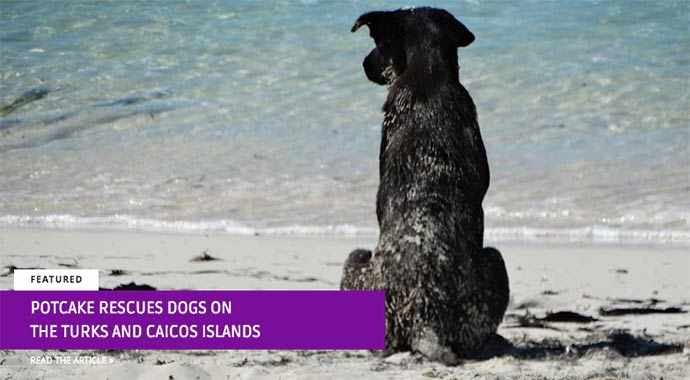 Potcake rescues dogs on the Turks and Caicos Islands
