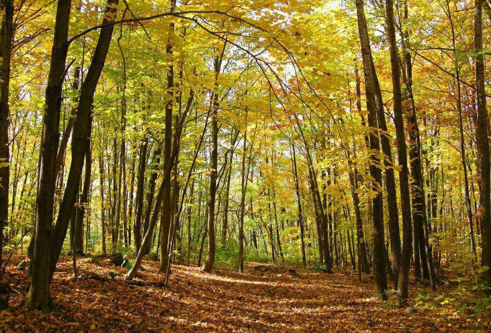 Rousseau Forest in the fall
