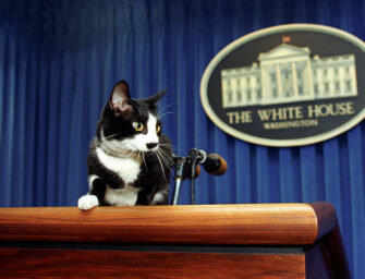 Presidential cats demand equal time