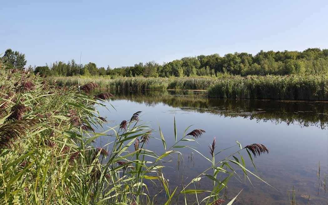 Technoparc Wetlands - WestmountMag.ca