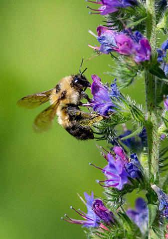 Bee visiting flowers
