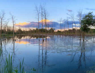 Sierra Club holds roundtable <br>on Technoparc Wetlands